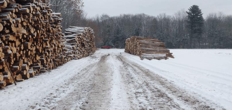 Mise en marché du bois